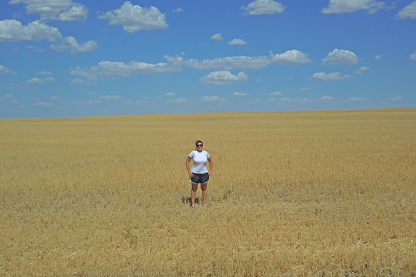 wheat field, Kansas