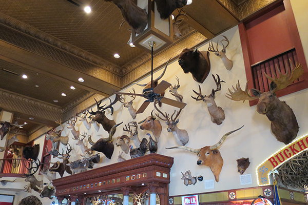 The Buckhorn Museum and the Texas Ranger Museum, San Antonio