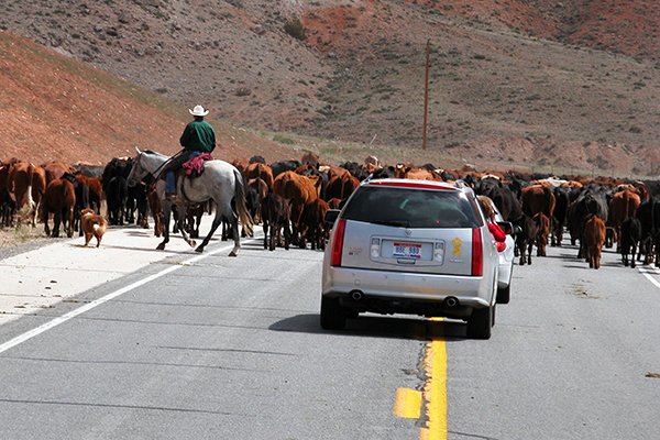 traffic on a Wyoming state highway