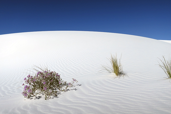Alkali Flats Trail, White Sands National Monument, New Mexico